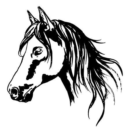 Horse head painted portrait with raising main. Hand painted illustration, ink graphic. Vector icon for hippodrome, racing sport design.
