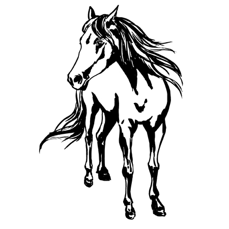 Proud horse, standing on the pasture, silky mane and tail are flowing with the wind, front view. Hand drawn ink painted horse portrait, vector illustration for farm horse breeding.
