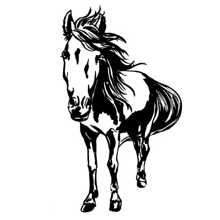 Cute horse portrait, ink painted illustration of beautiful purebred horse with  mane and tail, flowing with the wind, top view.  vector illustration for horse races or equestrian competitions design. Stock Photo