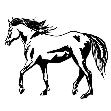 Beautiful horse painted illustration, walking purebred mare horse with flowing silky mane and tail. Vector hand drawn ink illustration for rases, hippodrome design.