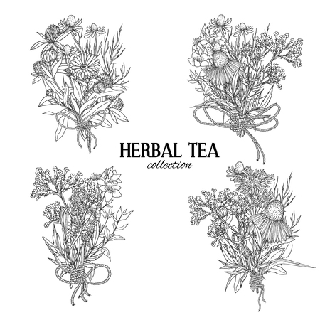 rose bouquet: Four bouquets composed of medicinal herbs and flowers, herbal tea, rope bows, vintage sketch vector illustration Illustration