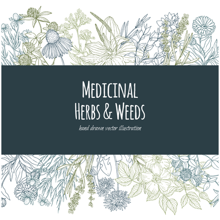 Horizontal banner with color medicinal flowers and herbs on white background.