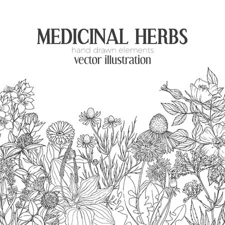 薬効があるハーブと花の下部には、テキスト、ベクトル図のための場所のヴィンテージのスケッチ カード テンプレートです。