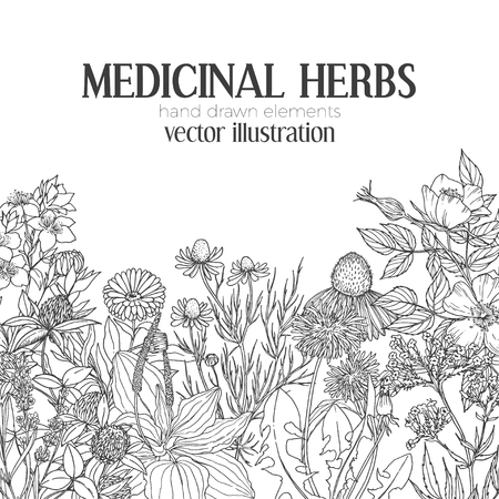 Card template with vintage sketches of medicinal herbs and flowers on the bottom, place for text, vector illustration.