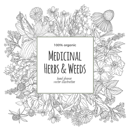 Square banner for text with medicinal flowers and herbs on the white background, vintage vector illustration, echinacea, chamomile, lavender, calendula, clover, dandelion, st johns wort, plantain, dog rose and valeriana