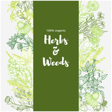Vertical green banner with color medicinal herbs and flowers on white background. Illustration