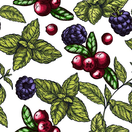 Seamless pattern with colorful sketch illustrations of mint leaves, cranberries  and blackberries, vector pattern