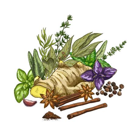 料理用のハーブおよびスパイス、フルカラーのベクトル図のヒープ