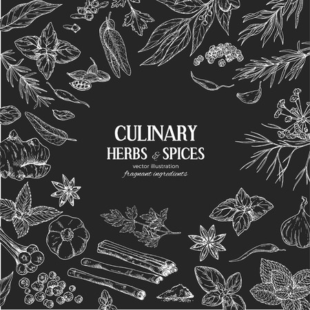 Chalk frame composed of drawn herbs and spices on black background, vector illustration