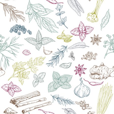 Seamless pattern with colored hand drawn culinary herbs and spices, vector illustration Ilustração