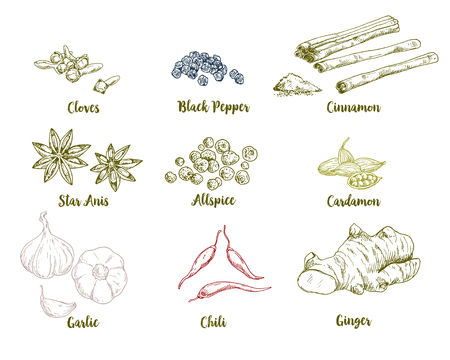 Set of colored hand drawn culinary spices, vector illustration for indian menu