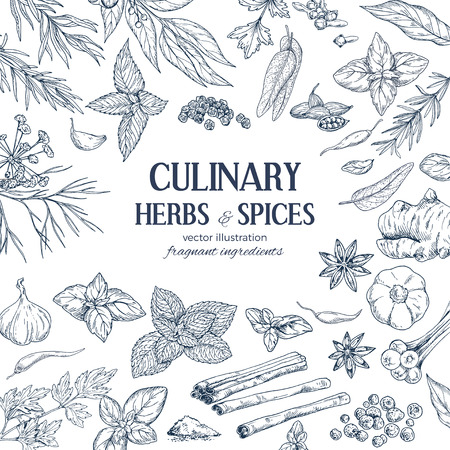 frame composed of hand drawn herbs and spices on white background, vector illustration