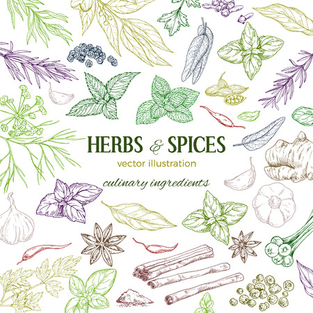 frame composed of hand drawn colored herbs and spices on white background, vector illustration
