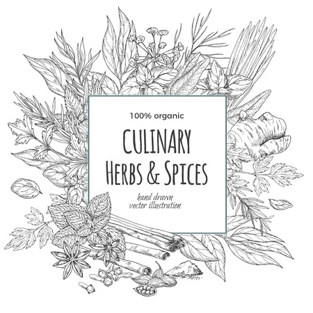 Square frame surrounded by culinary herbs and spices, vector illustration