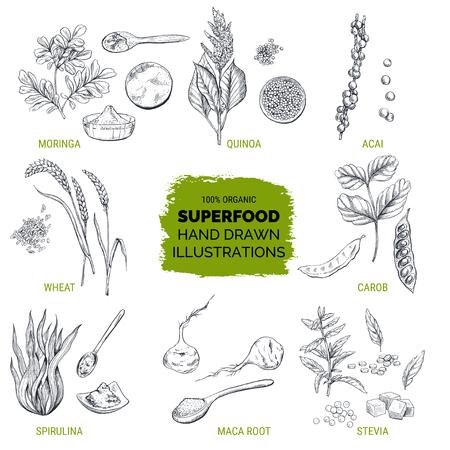 Superfood, handgetekende schets, vectorillustratie Stock Illustratie