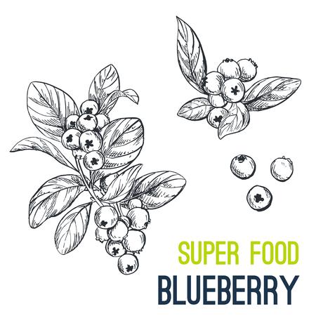ブルーベリー。スーパー食品手描きスケッチのベクター イラストです。