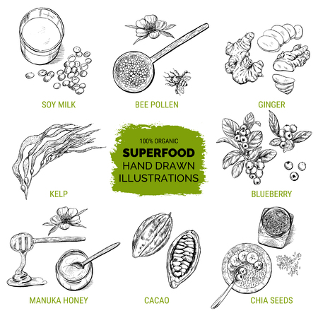 Superfood, hand drawn sketch, vector illustration
