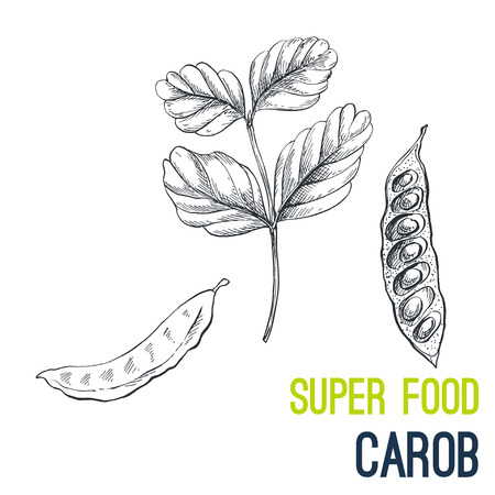 Carob. Super food hand drawn sketch vector illustration.