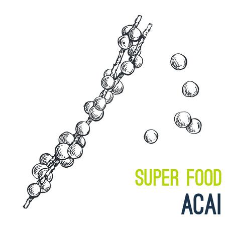 Acai berries. Super food hand drawn sketch vector illustration.