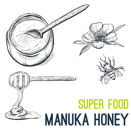 Manuka Honey. Super food hand drawn sketch vector illustration.