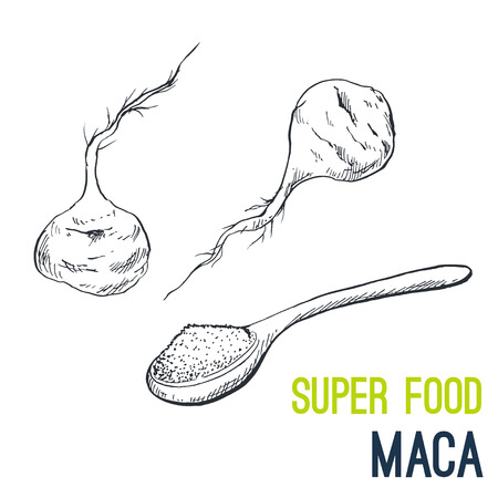 Maca Root. Super food hand drawn sketch vector illustration. Illustration
