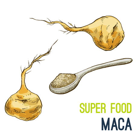 Maca root. Full color super food hand drawn sketch vector illustration.