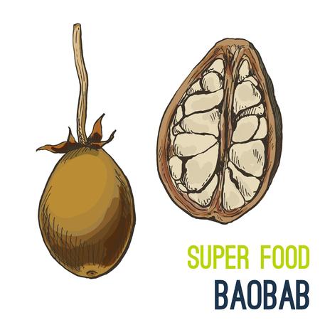 Baobab. Full color super food hand drawn sketch vector illustration. Illustration