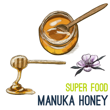 Manuka honey. Full color super food hand drawn sketch vector illustration.