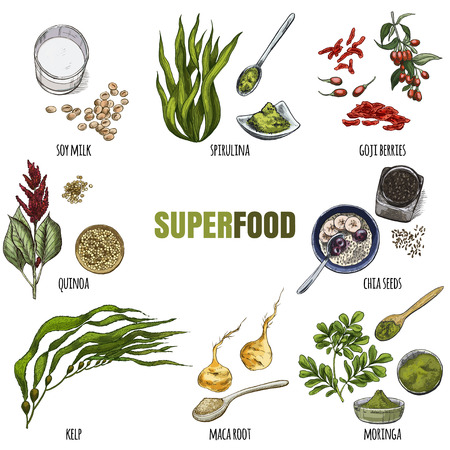 Superfood set. Full color realistic sketch vector illustration. Ilustração