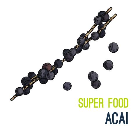 Acai berries. Full color super food hand drawn sketch vector illustration.