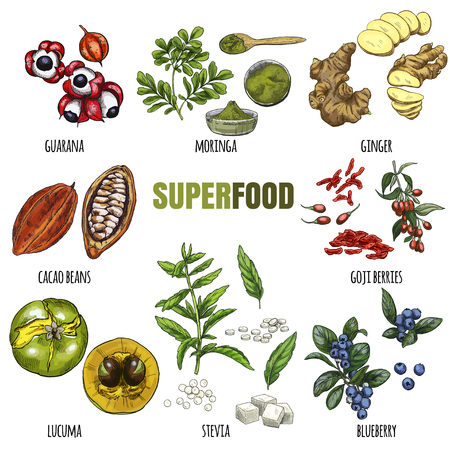 Superfood set. Full color realistic sketch vector illustration. Illustration