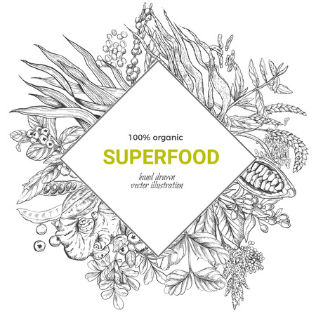 Superfood rhombus banner, realistic sketch vector illustration, vegan healthy food design. Kelp, cacao, ginger, moringa, blueberry, goji, stevia, seeds, grain. Illustration