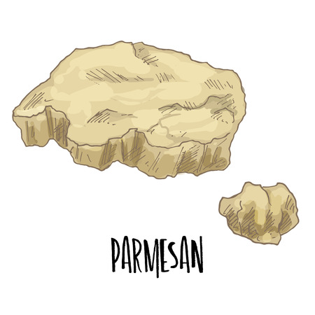 Parmesan. Full color cheese illustration, vector hand drawn sketch art.