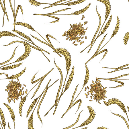 Grano con grano Modello botanico senza cuciture, illustrazione di schizzo di vettore di colore pieno realistico.