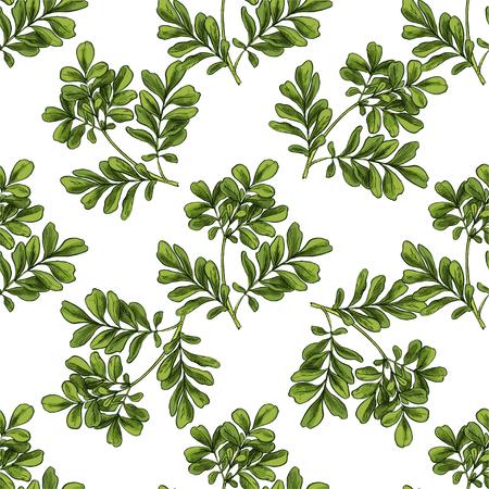 Moringa. Seamless botanical pattern, Realistic full color vector sketch illustration.