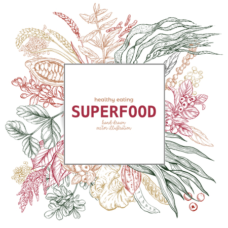 Superfood square banner, color sketch vector illustration, vegan healthy food design. Kelp, cacao, ginger, moringa, blueberry, goji, stevia, seeds, grain. Illustration