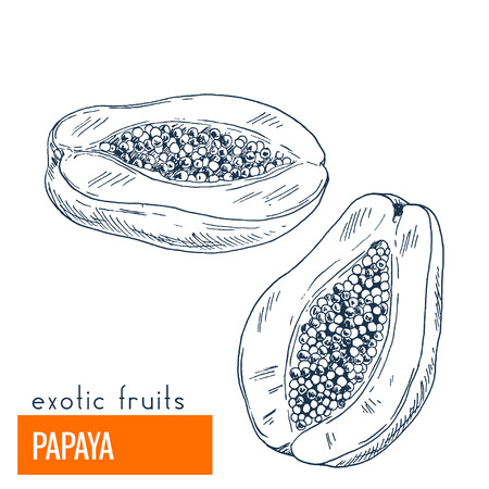 Papaya. Hand drawn vector illustration, vintage enngraving style.