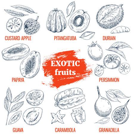 Exotic Fruits collection. Custard apple, papaya, guava, pitangatuba, durian, persimmon, carambola, granadilla. Hand drawn vector illustration, vintage enngraving style. Illustration