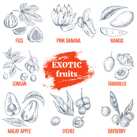 Exotic Fruits collection. Fig, pink bananas, mango, longan, tamarillo, malay apple, lychee, bayberry. Hand drawn vector illustration, vintage enngraving style. Иллюстрация