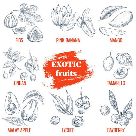 Exotic Fruits collection. Fig, pink bananas, mango, longan, tamarillo, malay apple, lychee, bayberry. Hand drawn vector illustration, vintage enngraving style. Illustration