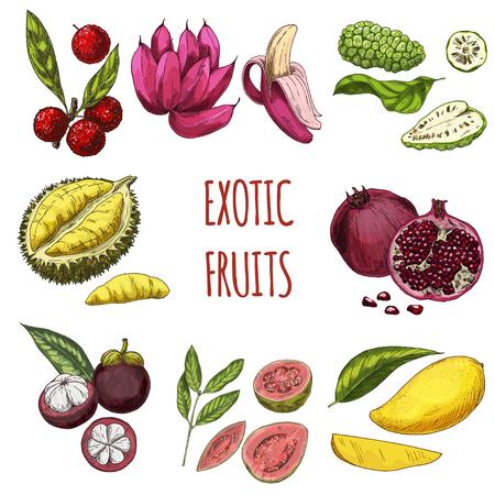 エキゾチックなフルーツ、ベクトル手描きコレクション。ヤマモモ、ピンクのバナナ、ノニ、ドリアン、ザクロ、マンゴスチン、グァバ、マンゴー