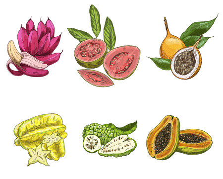 Exotic fruits, hand drawn vector illustration, colored sketch. Pink bananas, guava, carambola, noni, papaya, granadilla