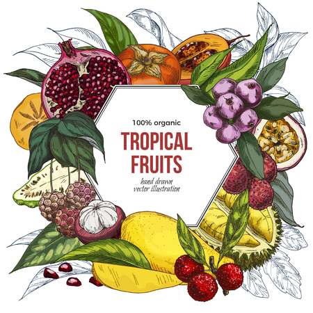 Full color realistic drawn exotic fruits, hexagonal banner. Hand drawn vector illustration.