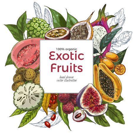 Full color realistic drawn exotic fruits, square banner. Hand drawn vector illustration. Vettoriali