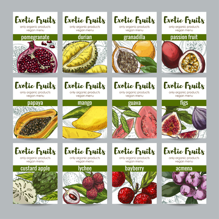 Set of 12 exotic fruits posters, hand drawn vector illustrations, full color realistic.