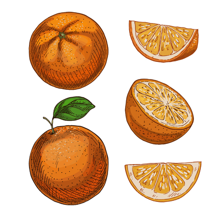Orange, set of elements. Full color realistic sketch vector illustration. Hand drawn painted illustration.