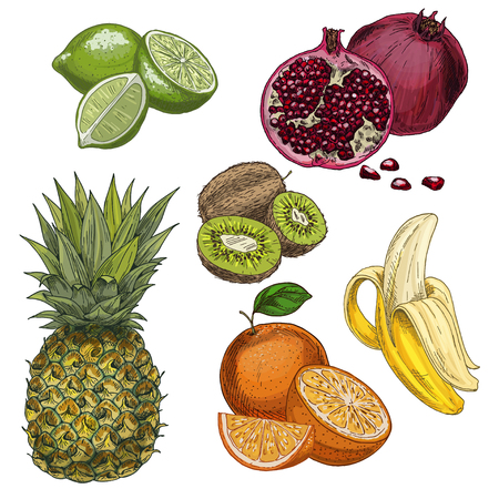 Tropical fruits. Pineapple, lime, pomegranate, kiwi, banana, orange. Full color realistic sketch vector illustration. Hand drawn painted illustration.