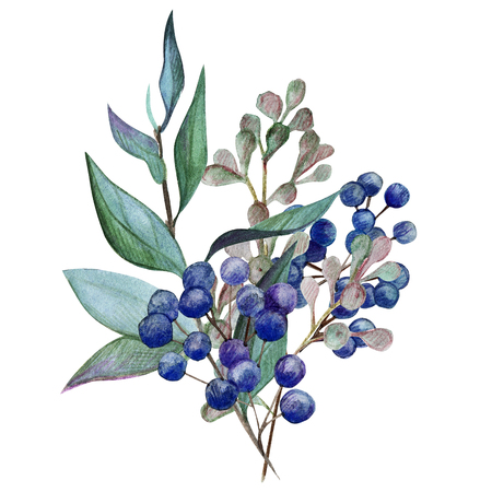 floral watercolor arrangement with berries, hand drawn illustration Фото со стока