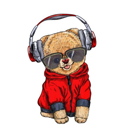 Cute pomeranian toy dog dressed in red hoodie