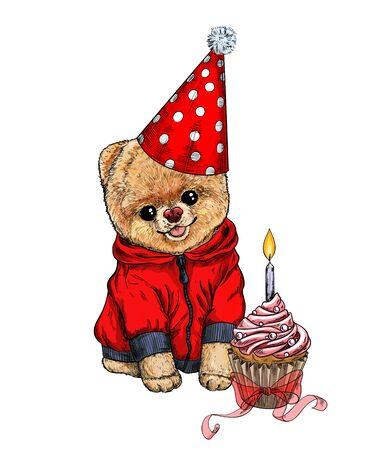 Pomeranian toy dig dressed in birthday hat